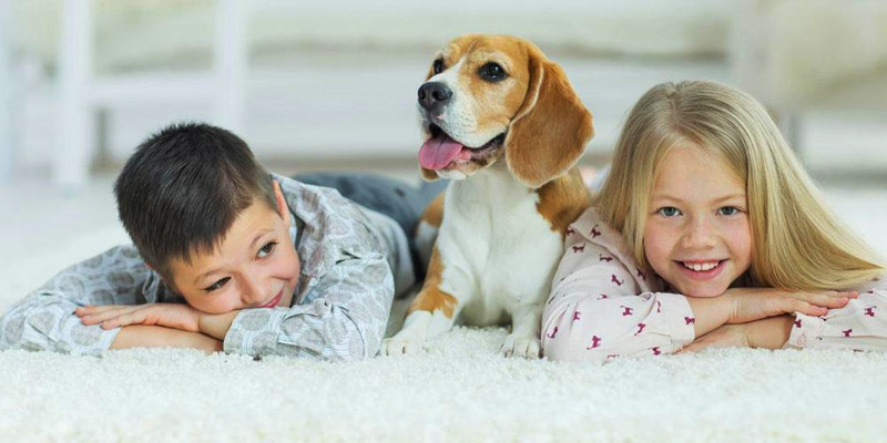 Tips on Carpet Cleaning for Pet Owners
