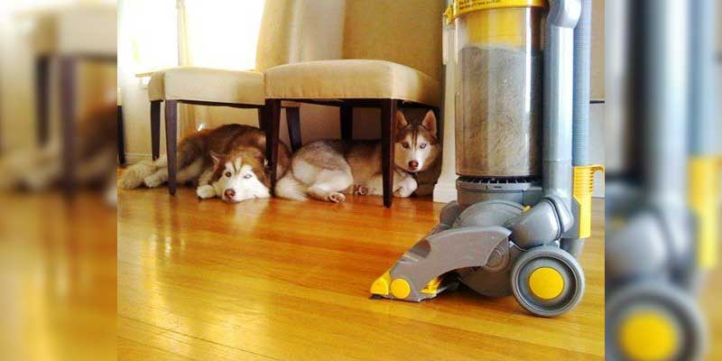 Protecting Your Carpet from Pets
